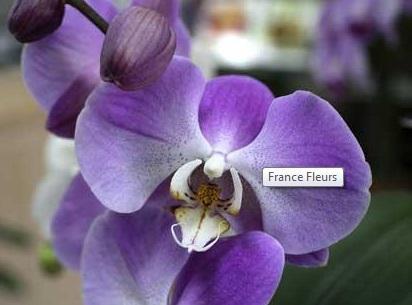 fleuriste ch teaubriant la livraison est gratuite sur ch teaubriant france fleurs. Black Bedroom Furniture Sets. Home Design Ideas